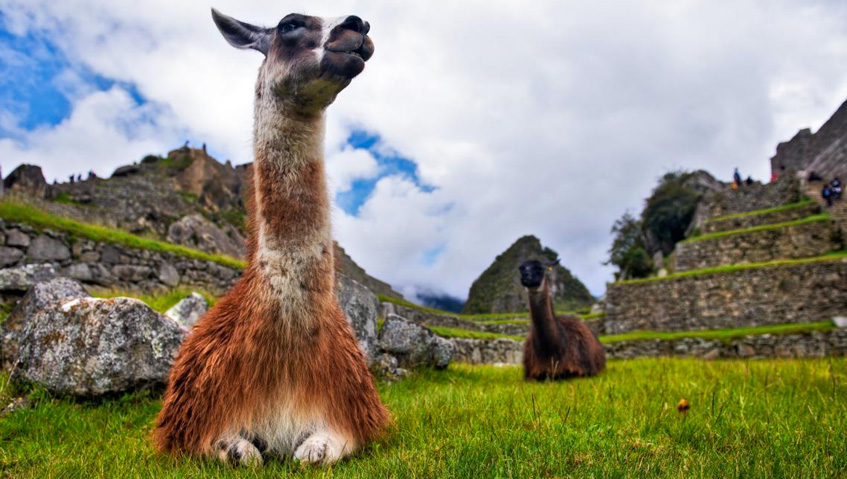 Visit Machu Picchu this summer